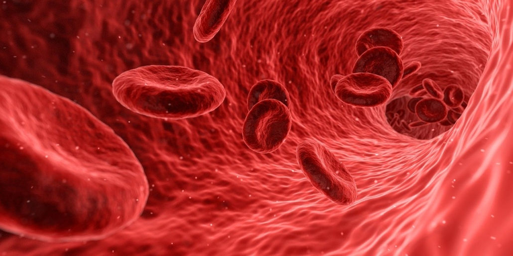Blutzellen Bild von Arek Socha auf Pixabay